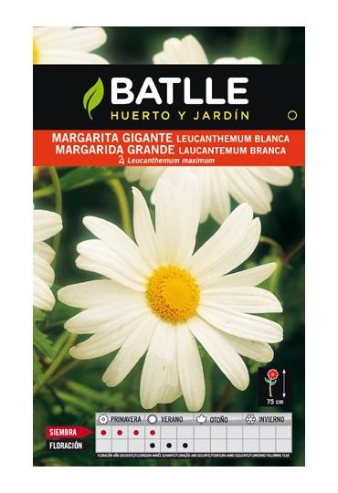 BATLLE SEMILLA DE MARGARITA GIGANTE BLANCA