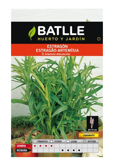 BATLLE SEMILLA DE ESTRAGON