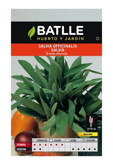 BATLLE SEMILLA DE SALVIA OFINALIS