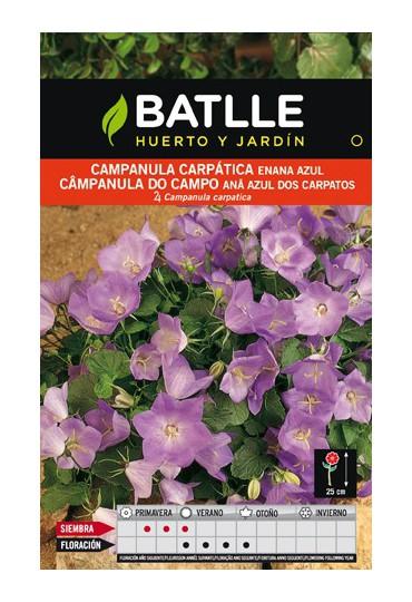 BATLLE SEMILLA DE CAMPANULA CARPÁTICA ENANA AZUL