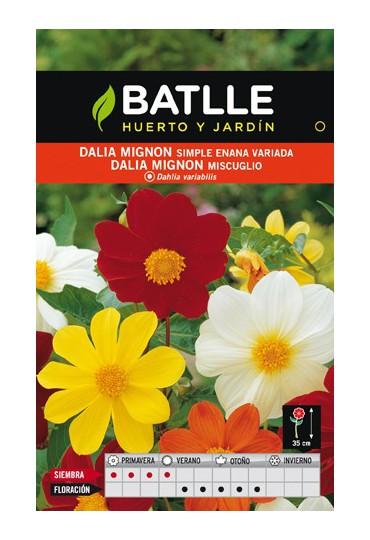 BATLLE SEMILLA DE DALIA MIGNON