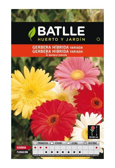 BATLLE SEMILLA DE GERBERA HIBRIDA VARIADA