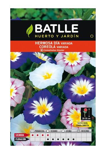 BATLLE SEMILLA DE HERMOSO DIA