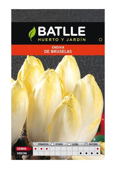 BATLLE ENDIVIA DE BRUSELAS