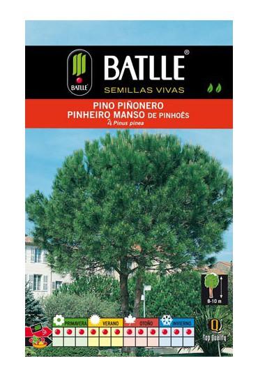 BATLLE PINO PIÑONERO - PINUS PINEA