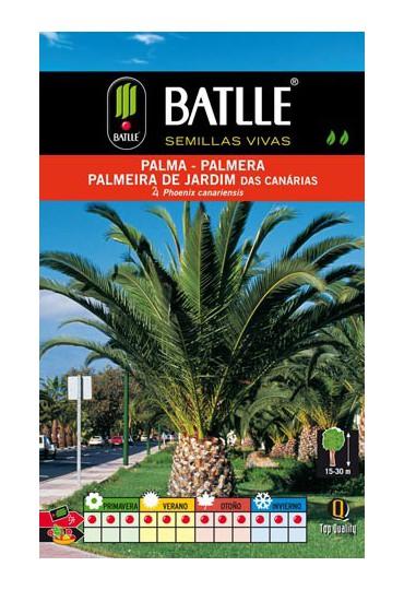 BATLLE SEMILLA PALMA-PHOENIX CANARIENSIS