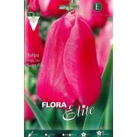 tulipan-rosa-fuerte-elite