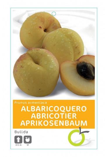 ALBARICOQUERO BULIDA