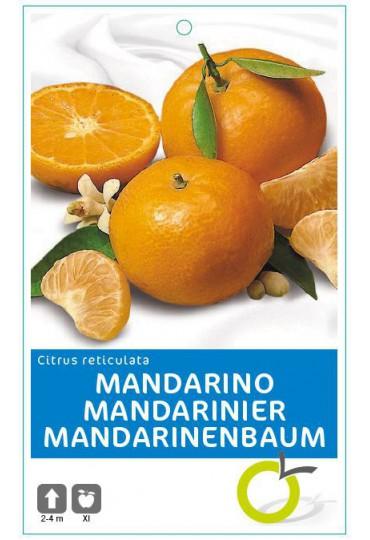 MANDARINO CIT. RETICULATA