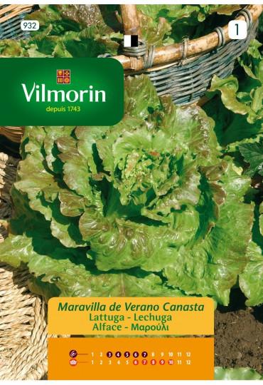 VILMORIN SEMILLA LECHUGA MAR DE VERANO