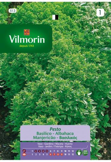 VILMORIN SEMILLAS ALBAHACA PESTO