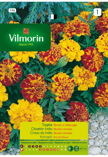 VILMORIN SEMILLAS CLAVELON INDIA BONITA