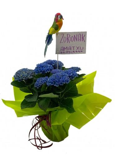Hortensia regalo día de la Madre