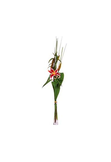 Lilium natural