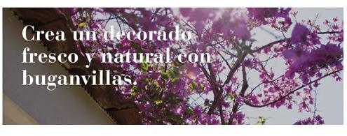 Crea un decorado fresco y natural con buganvillas. Garden Center Sopelana